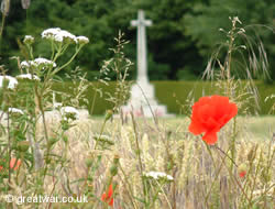Poppies on the Somme battlefield, France.