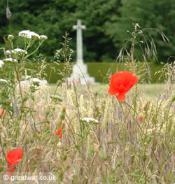 Poppies at Connaught Cemetery, Somme battlefield.