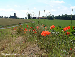 Poppies on the Somme battlefield at Thiepval