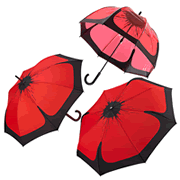 The Poppy Umbrella