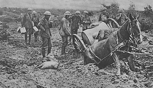British supply horse stuck in Flanders mud.